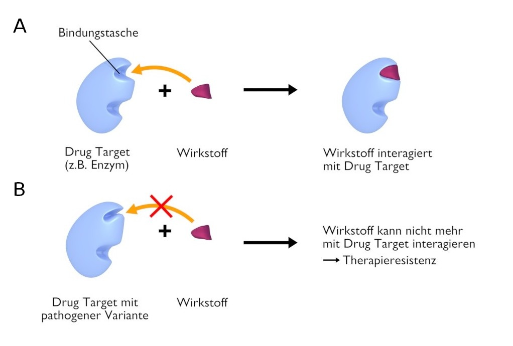 Pharmakogenetik Drug Target Wirkstoff Interaktion